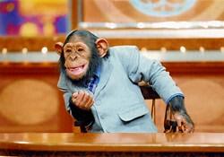 chimpannews_syoukai.jpg